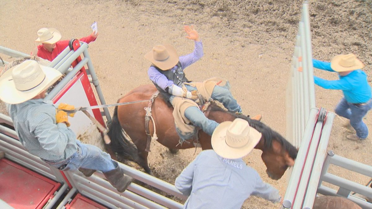 The annual stampede in Morris, Man., won't be taking place in 2020 due to the coronavirus pandemic.