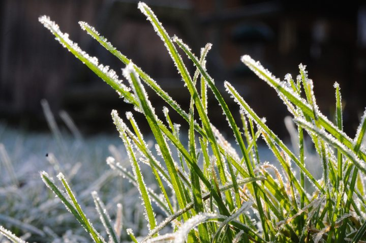 A heavy frost coats blades of grass in this file photo.