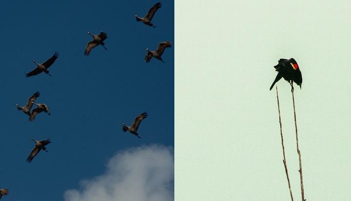 Amidst the coronavirus pandemic, Nature Saskatchewan is going virtual to celebrate World Migratory Bird Day.
