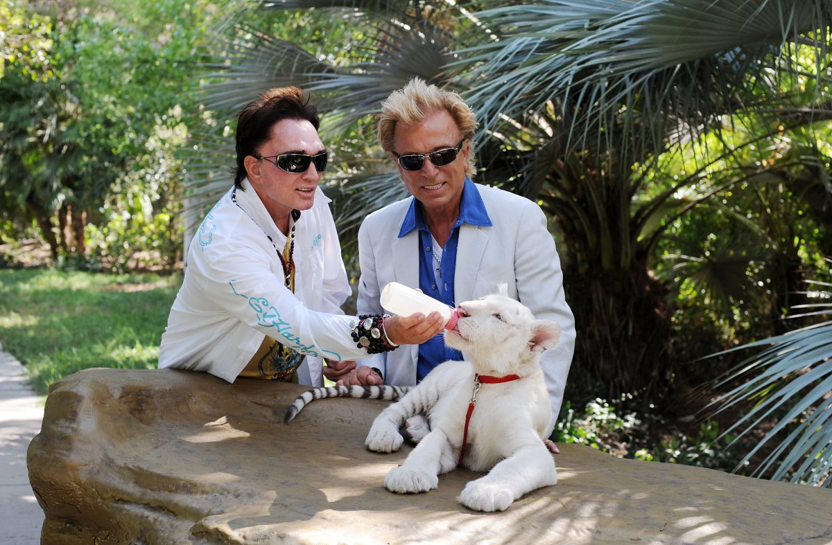 Illusionists Roy Horn and Siegfried Fischbacher with their 4 1/2 month old tiger cubs at Siegfried and Roy's Secret Garden at the Mirage Hotel and Casino on August 31, 2008 in Las Vegas, Nevada.