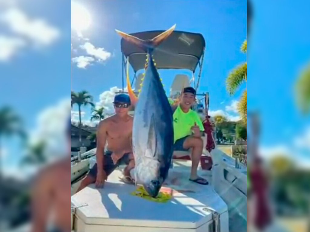 A group of five fishermen caught a 200-pound ahi tuna and donated it to front-line health-care workers during the coronavirus pandemic.