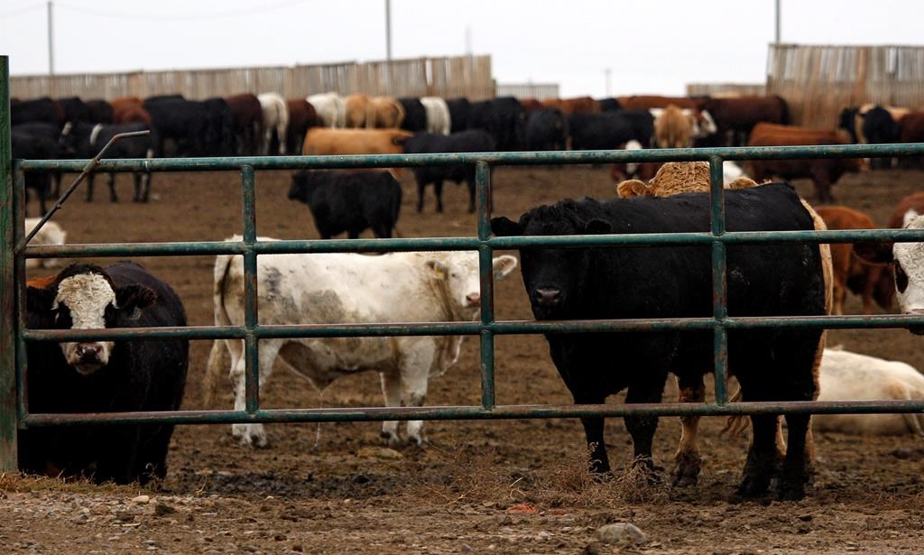 Ten million dollars in funding has been announced to help livestock producers amid industry slowdown.