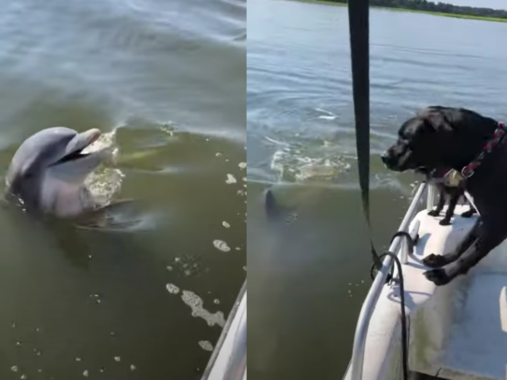 """Two dogs and a dolphin were seen """"interacting"""" on a boating trip near Savannah, Georgia."""