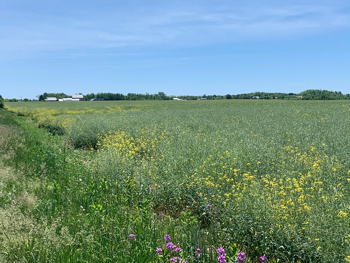 A photo of farm land in Prince Edward County in Ontario on June 8, 2020.