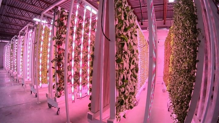 Local Leaf Farms plans to open its next location in Kingston. After that, it's aiming to open up 18 more locations across Canada over the next four years.