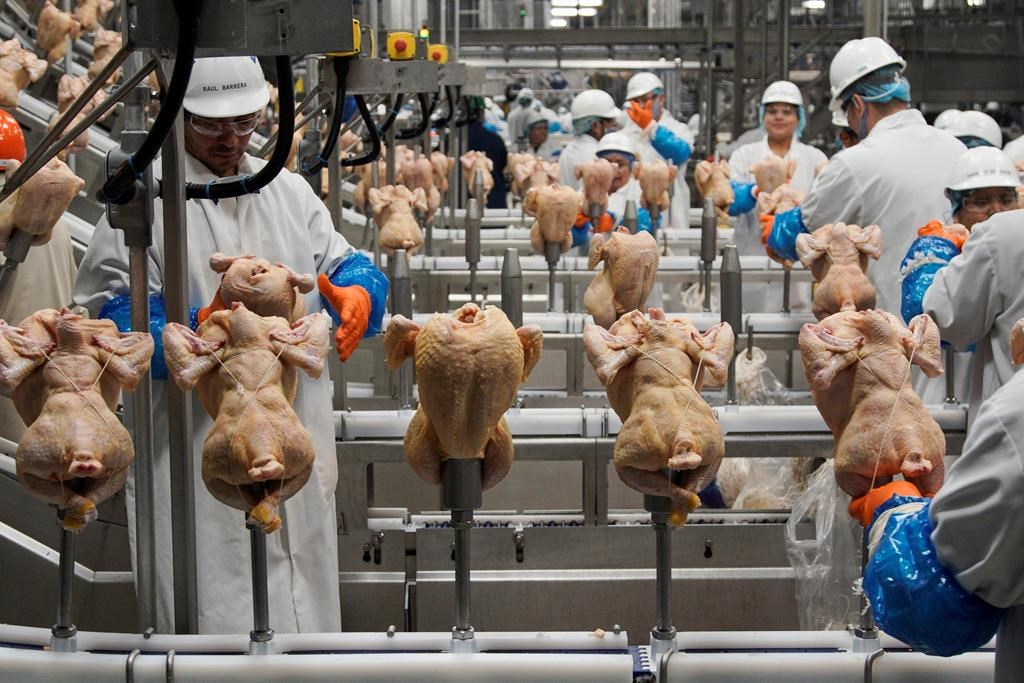 FILE - In this Dec. 12, 2019, file photo workers process chickens at the Lincoln Premium Poultry plant, Costco Wholesale's dedicated poultry supplier, in Fremont, Neb. (AP Photo/Nati Harnik, File).