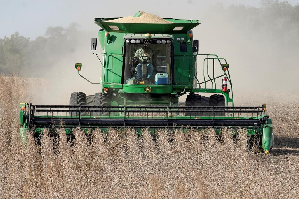 In this file photo, a combine harvests soybeans in rural Blair, Neb. On Oct. 17, 2019. According to Saskatchewan's crop report for the period of July 28 to Aug. 3, 2020, harvesting has begun in Saskatchewan.