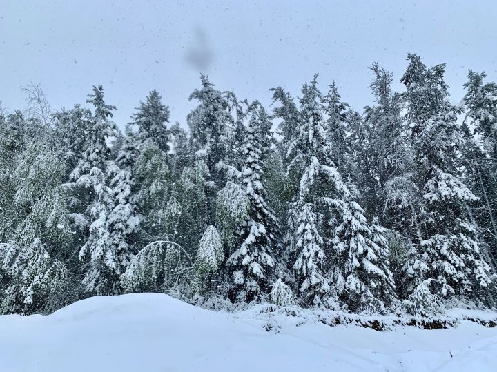 The northwestern Ontario township lost electricity for much of the day Thursday and saw several fallen trees after a June snowstorm.