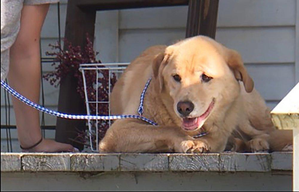 A Kansas dog made a 91 kilometre trek to her family's old home in Missouri.