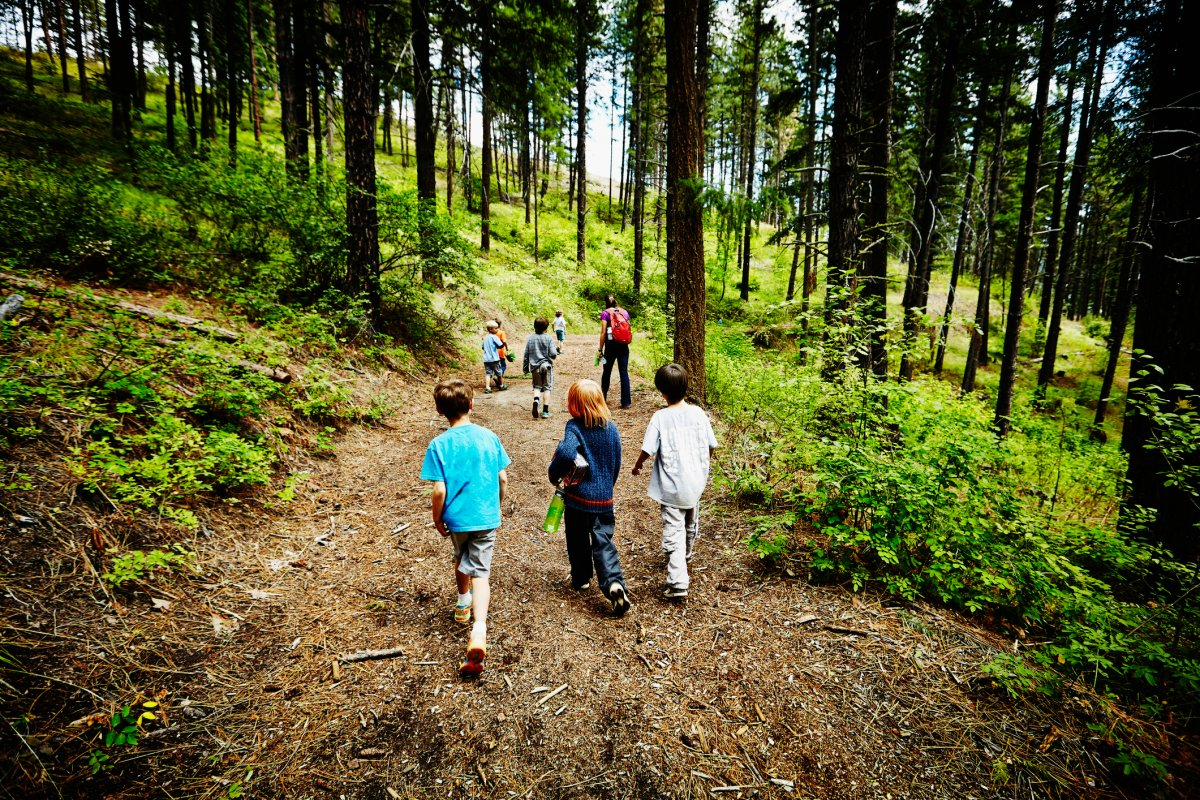 Group of young kids walking on trail in the woods with camp counselor at summer camp.