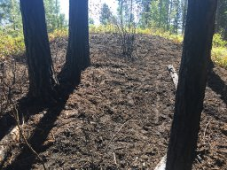 Continue reading: Friday night bush blaze quickly extinguished by Kelowna Fire Department