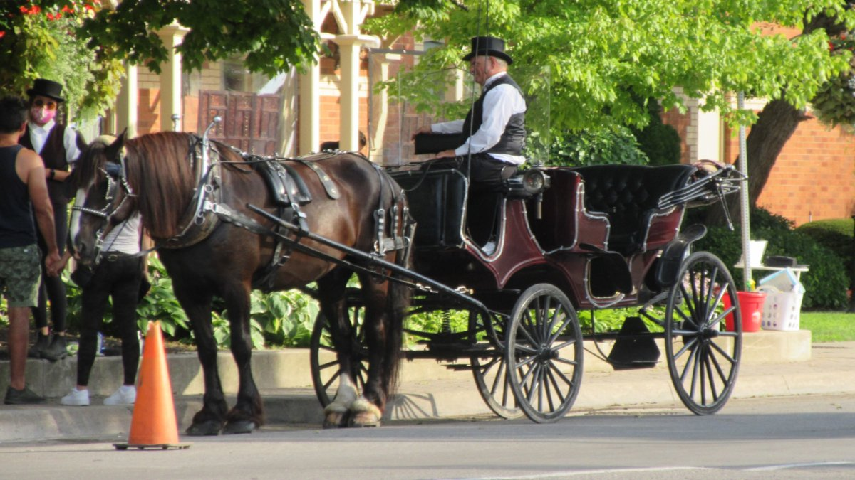 Niagara police have arrested a man in connection with an assult during a protest against the use of horse-drawn carriages in Niagara-On-The-Lake.
