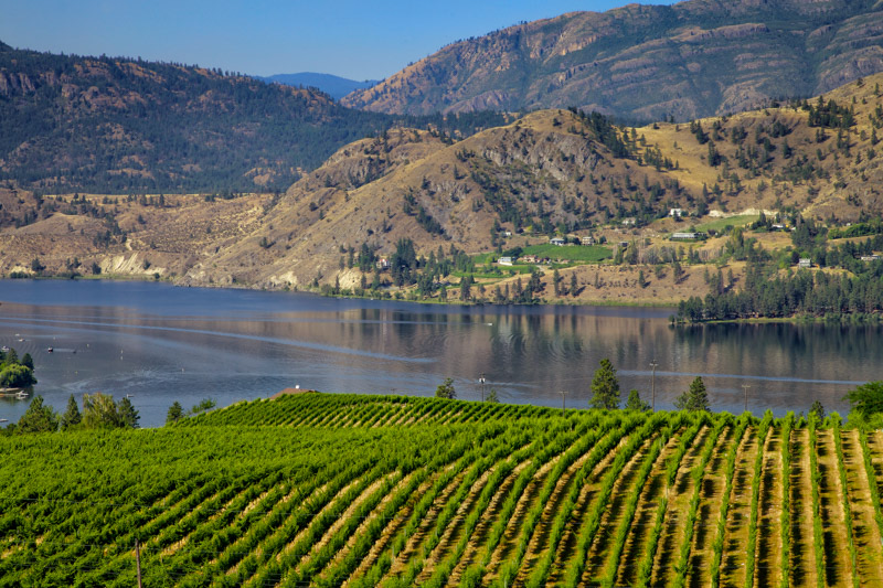A new wine app hopes to give B.C.'s wine industry a boost as the province eases pandemic-related restrictions.