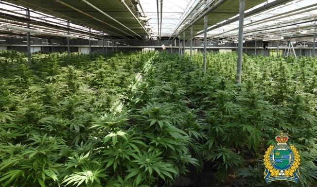 Police officers seized 17,200 marijuana plants from a facility in St. Catharines.