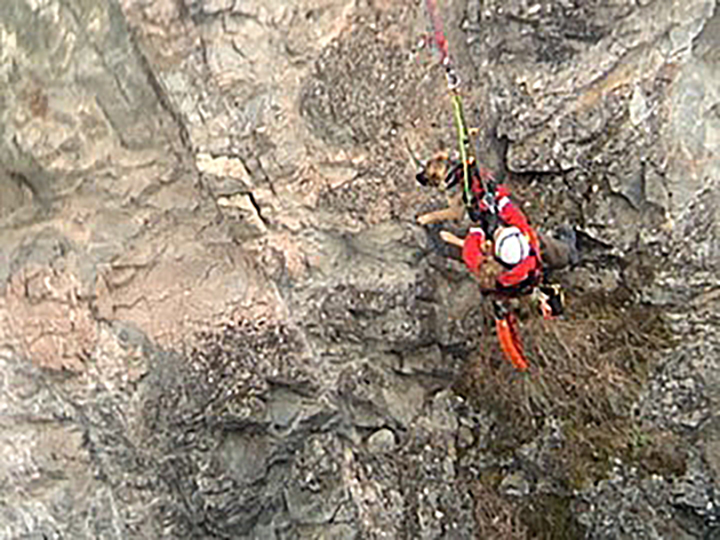 A Penticton Search and Rescue member seen scaling Trout Creek canyon near Summerland, B.C., with the harnessed German shepherd.