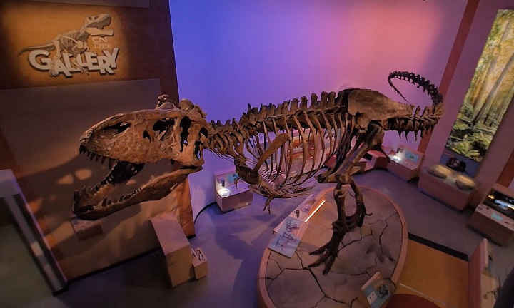 The Royal Saskatchewan Museum announced Thursday that Scotty will roar once again when it reopens its doors to the public on Friday.