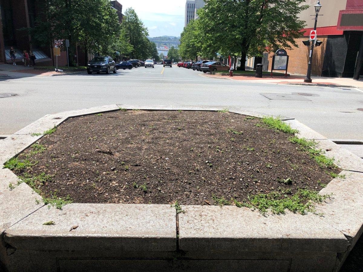 An empty flower bed in Kings Square in Saint John, N.B.