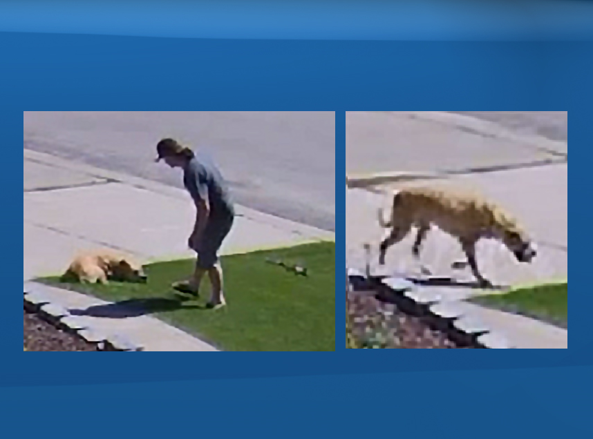 Edmonton police are hoping to identify this man and dog seen in west Edmonton on Aug. 5, 2020.