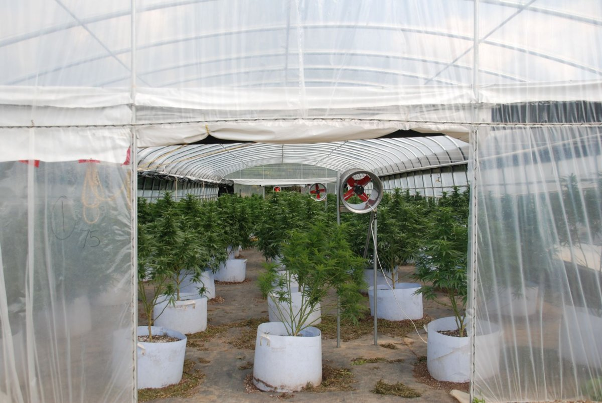 Nineteen people face charges after OPP seize cannabis plants in Hastings in the Municipality of Trent Hills.