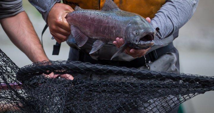 Coronavirus: Applications for $469M fish harvesters' aid program to open Aug. 24