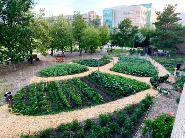 The 5,400 square foot vegetable garden at the University of Regina donates 1500 to 2000 pounds of food to those need every year.