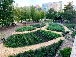 Continue reading: Coronavirus : U of R Green Patch Garden donating locally-grown food
