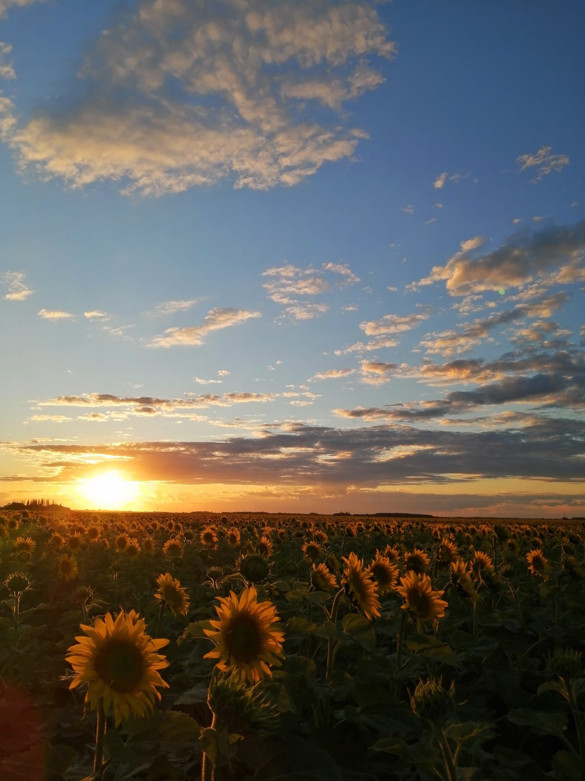 A field in Dugald, Manitoba.
