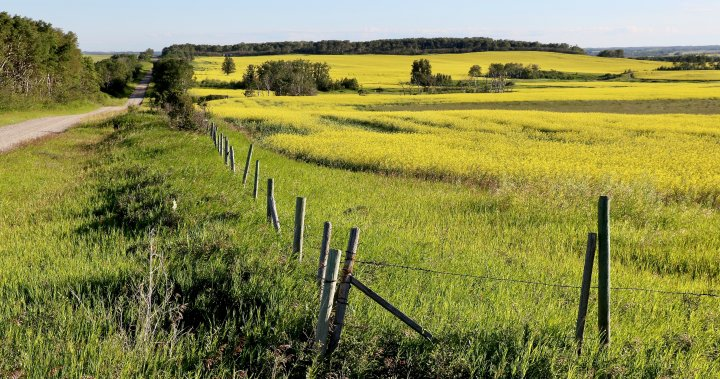 Your Saskatchewan photo of the day: August 2020