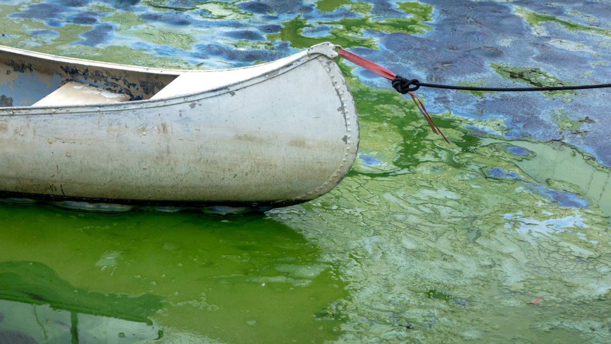 Officials from Niagara-on-the-Lake suspect toxic cyanobacteria from the waterfront at Ryerson Park may have contributed to the death of a dog.