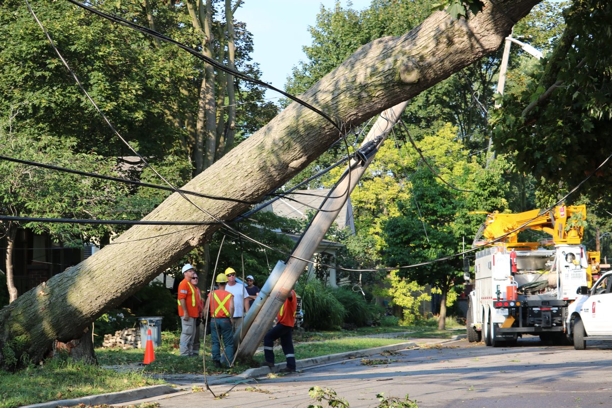 Severe storm brings down tree, hydro wires in London, Ont. Aug 27, 2020.