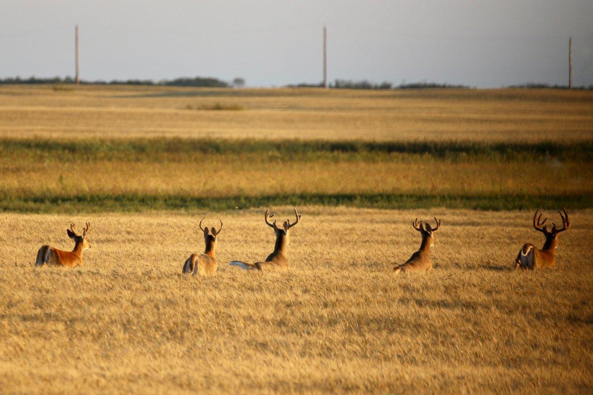 The Sept. 30 Your Saskatchewan photo of the day was taken by Brenda Gawluk in Fosston.