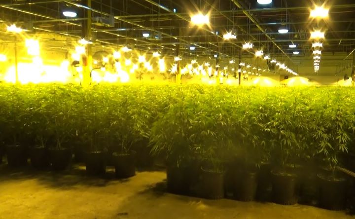 """Officers found what they say appeared to be a """"professional, high quality"""" operation that was growing thousands of cannabis plants."""
