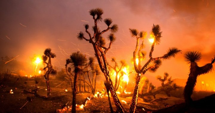 Strong winds force California wildfire into desert floor, burning houses