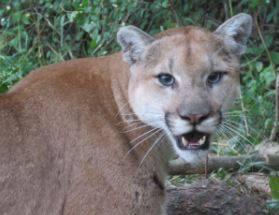 Boy cougar 5 BEST