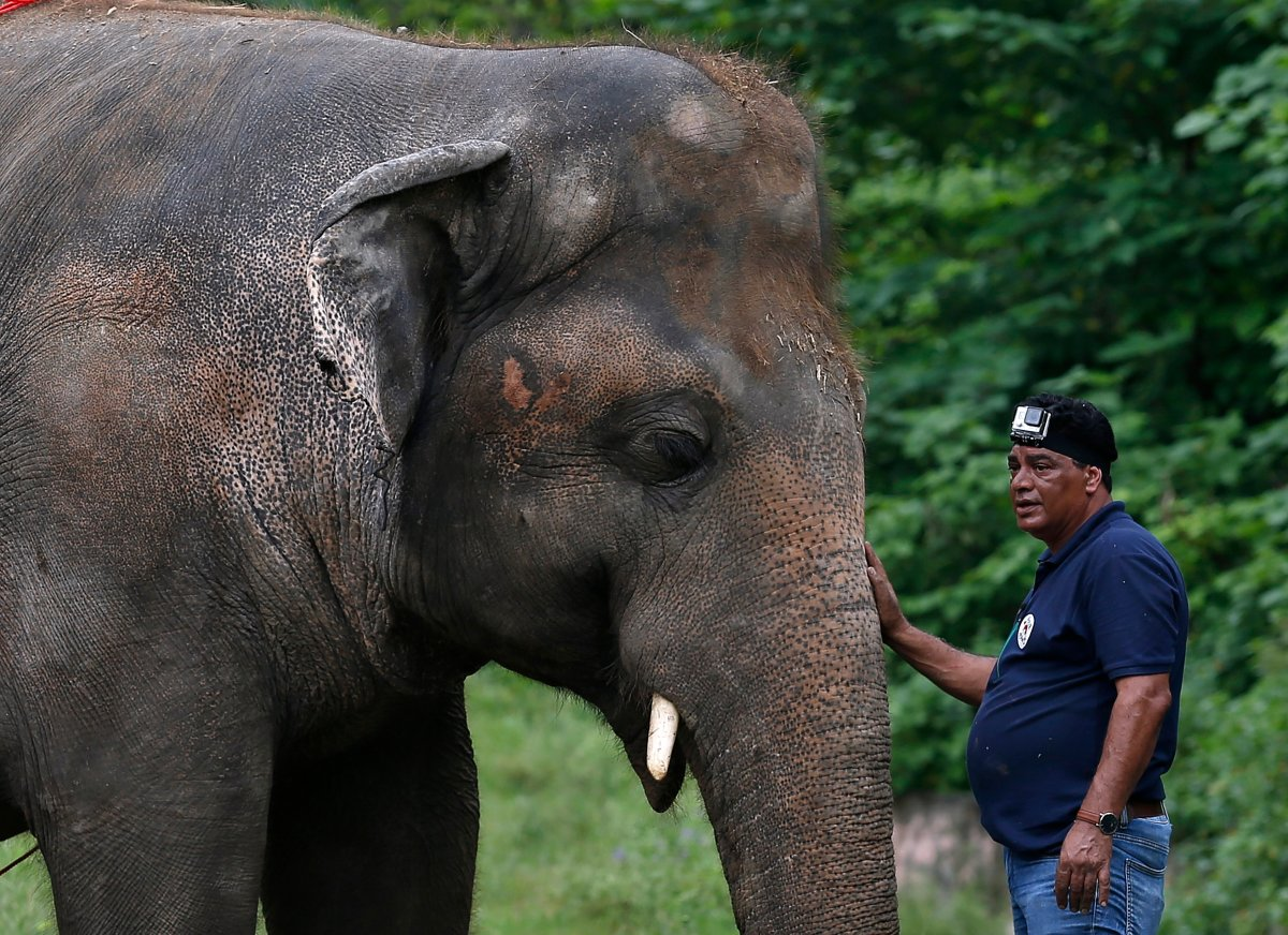 A veterinary from the international animal welfare organization 'Four Paws' offers comfort to an elephant named 'Kaavan' during his examination at the Maragzar Zoo in Islamabad, Pakistan, Sept. 4, 2020.