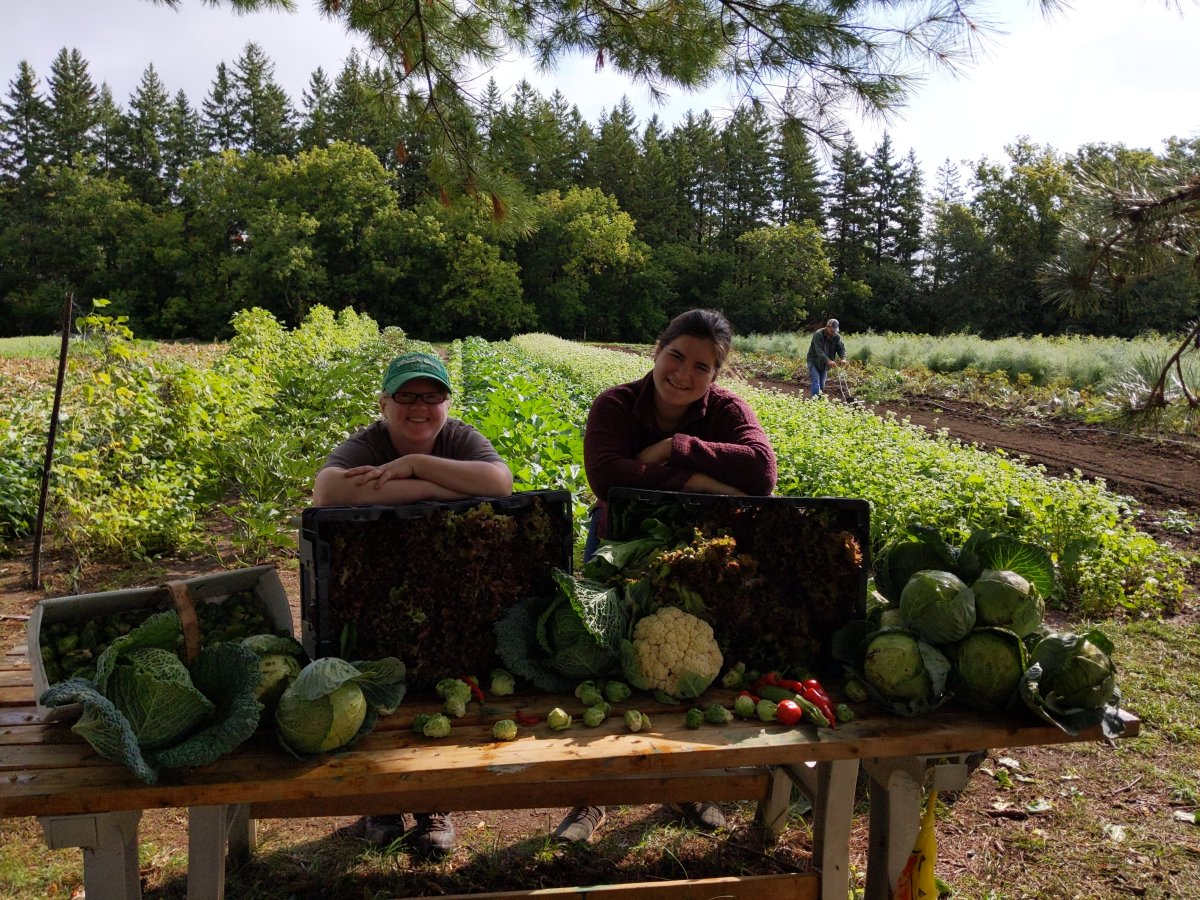 Lindsay community garden grows nearly 6,000 pounds of produce for food banks, non-profits - image