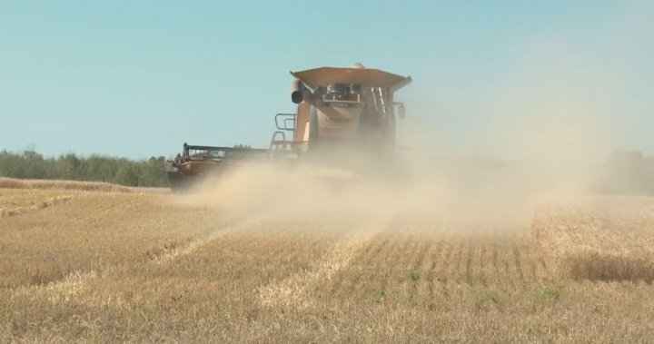 2020 harvest season lives up to low expectations on some northern Alberta fields