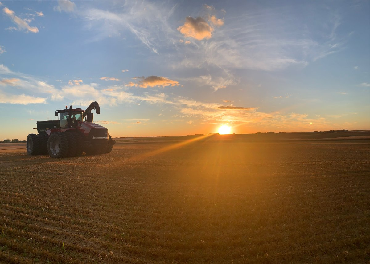 Manitoba's farmers are reporting strong yields, as they caught up to past years' progress after a week of favorable temperatures.
