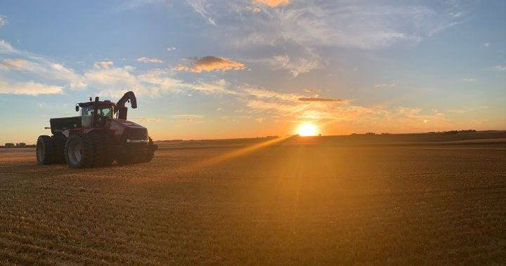 Warmer weather helps Manitoba farmers catch up on harvest, wheat crops exceed expectations