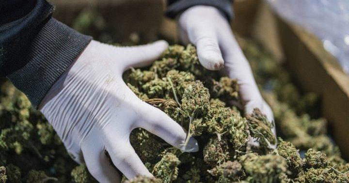 Reddit posts drive cannabis stocks to record high