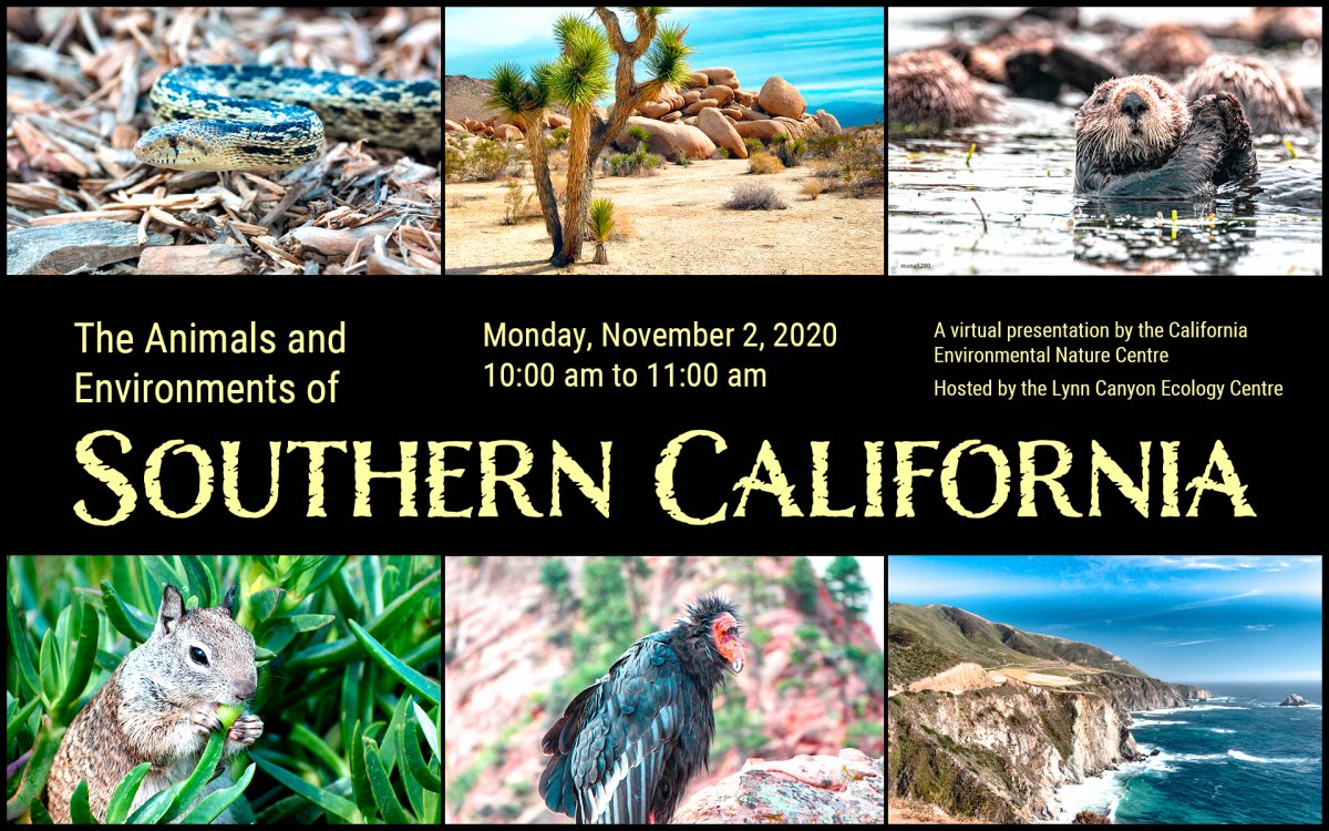 Monday, November 2 10:00 am to 11:00 am Take a virtual trip to Southern California, where you'll learn how the local plants and animals have adapted to live in their desert and mountain home. This program is offered in collaboration with our guests, the Environmental Nature Center. The program is for children aged 5 and up. Sign up on EventBrite https://www.eventbrite.ca/e/127003217041 For information on other upcoming programs, visit our website www.lynncanyonecologycentre.ca This program will take place on Zoom. We will email a link to participants approximately an hour prior to the program. Please make sure that there is an adult present to help children participate in the chat questions. This session will be recorded so we ask that your video and audio stay off. Whilst this program is free our suggested donation is $2 to help us continue to offer these amazing programs from the Ecology Centre!.