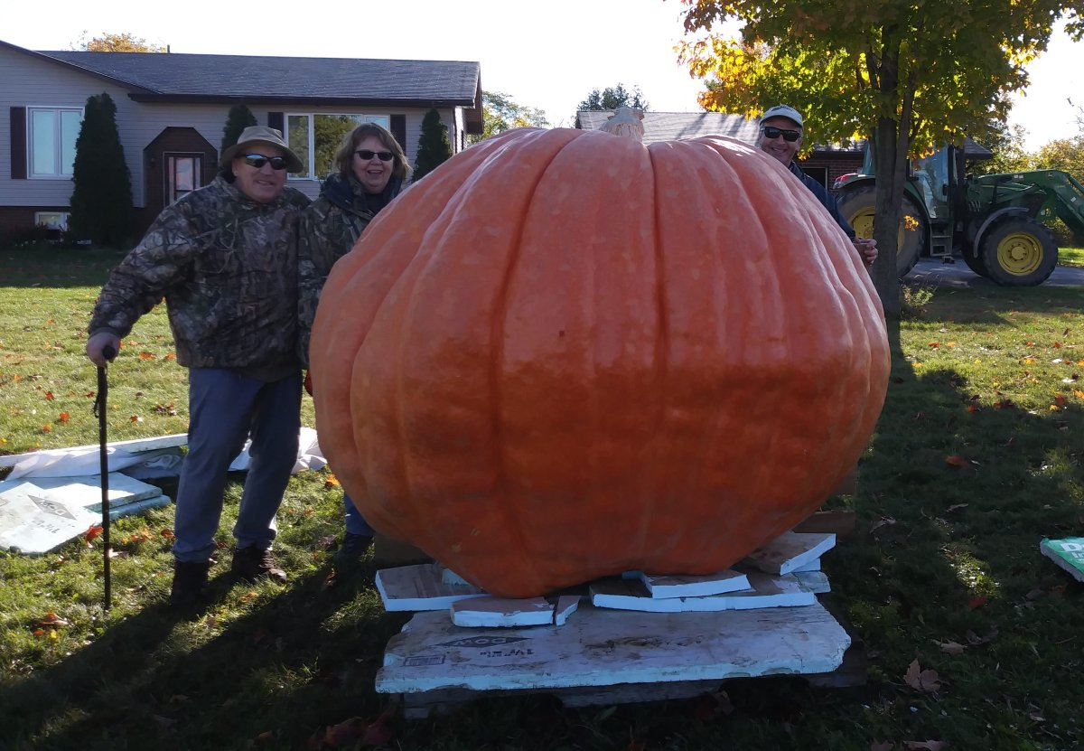 The Hunt family in Cameron, Ont., has grown another giant pumpkin that could set a Canadian record.