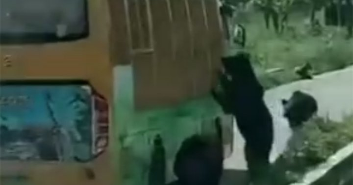 Bears fatally maul zookeeper in front of visitors at China zoo