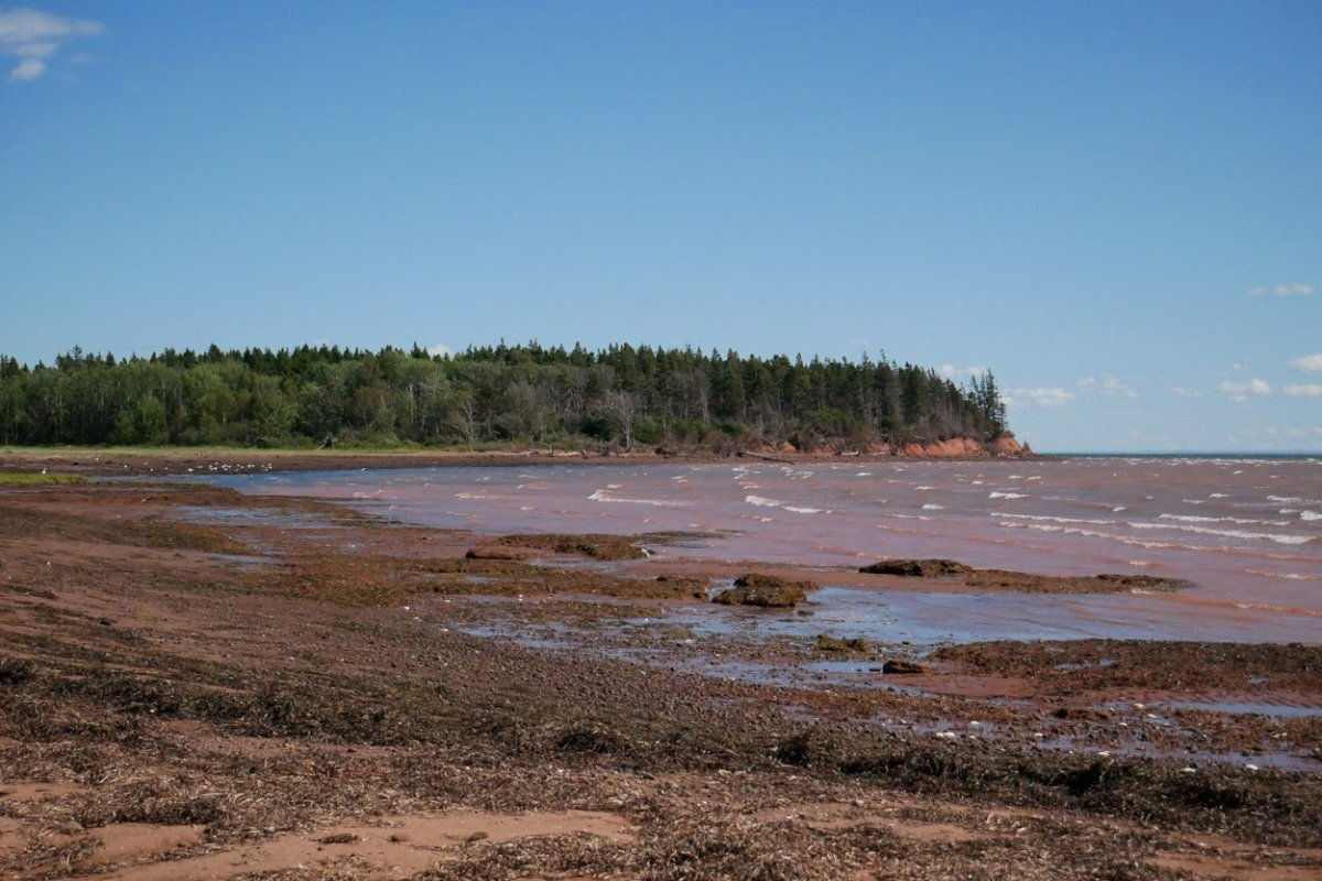 The Nature Conservancy of Canada says 58-hectare land on Ephraim Island that's connected to mainland New Brunswick, has been donated to the non-profit by a Toronto couple.