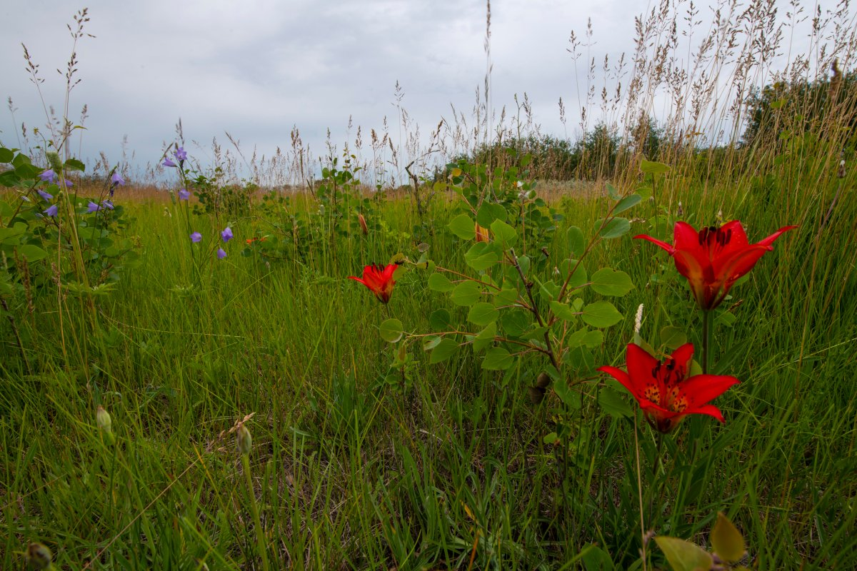 The land in the new conservation area in Asquith, Sask.