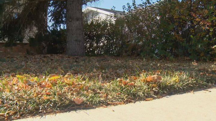 Leave it be - there a few benefits of keeping leaves on your lawn through the winter.