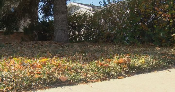 Leave the leaves: nature conservancy says unraked leaves can have hidden benefits for wildlife
