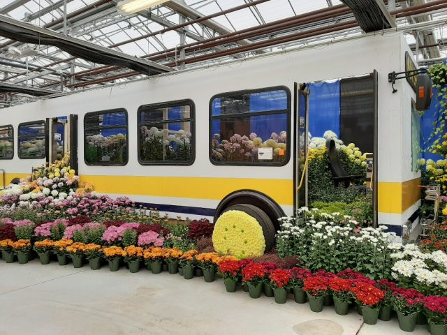 The 100th annual Mum show, a tribute to front-line workers, is underway at Hamilton's tropical greenhouse in Gage Park.
