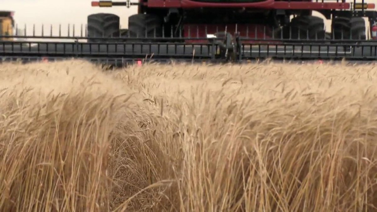 Progress on the harvest in Saskatchewan comes as a report from Statistics Canada paints a picture on estimated field yields.