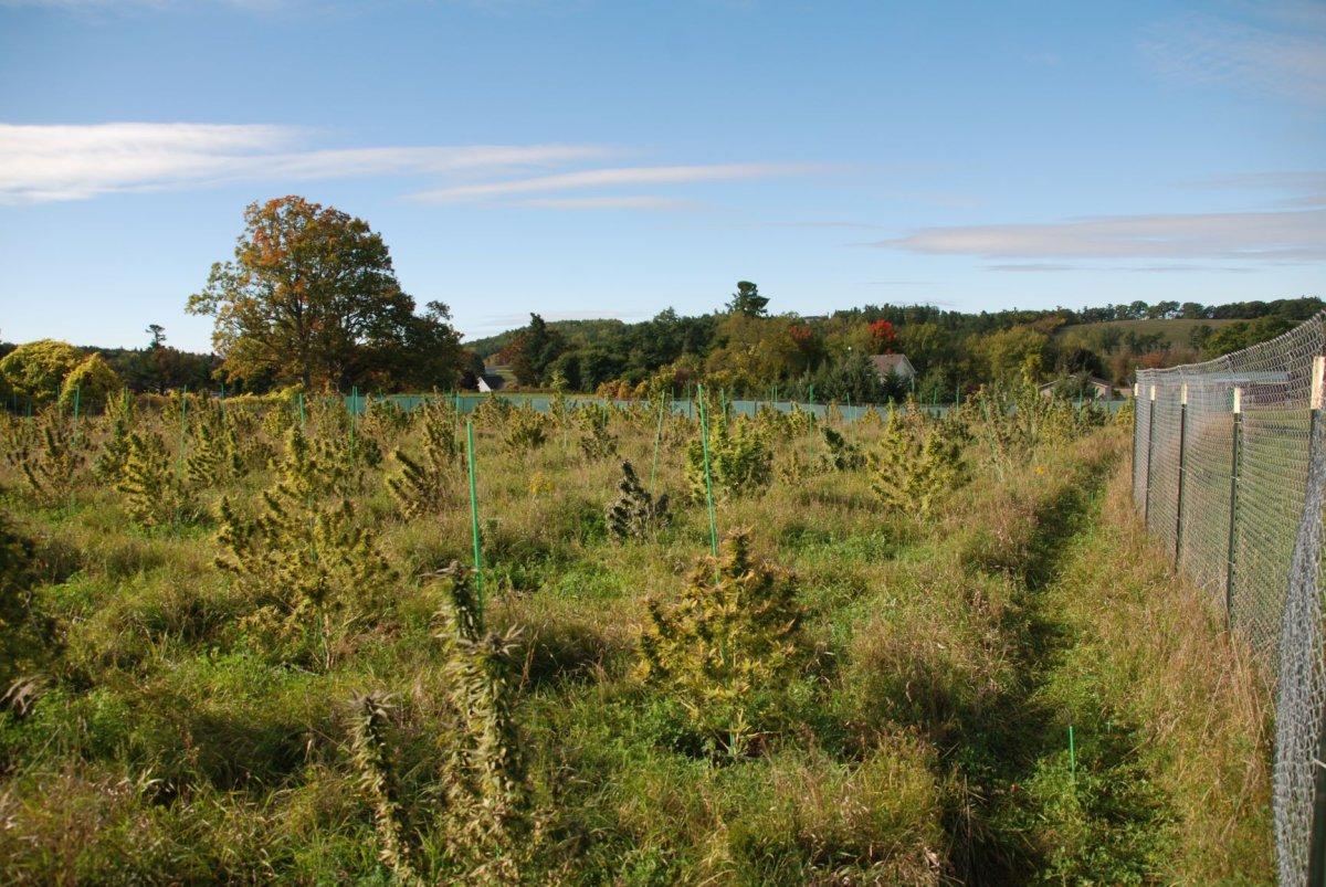 Northumberland OPP seized hundreds of marijuana plants from a property in Hamilton Township on Thursday.